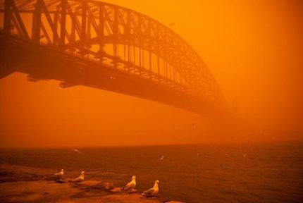 Red Sydney